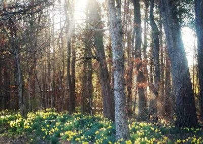 Sacred Grove Retreat Center, April 24-26, 2020